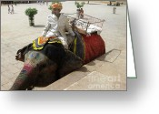 Elephant Ride Greeting Cards - The Elephant Jockey of India Greeting Card by Paul Ward