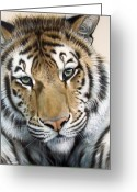 Tiger Greeting Cards - The Embrace Greeting Card by Sandi Baker