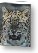 Hunter Greeting Cards - The eyes of a Jaguar Greeting Card by Paul Ward