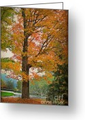 Rural Road Greeting Cards - The Fay Tree Greeting Card by Deborah Benoit