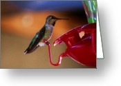S. California Greeting Cards - The Feeder Greeting Card by Helen Carson