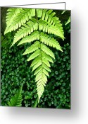 Palm Leaf Digital Art Greeting Cards - The Fern Greeting Card by Mindy Newman