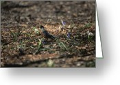 Spring Scenes Greeting Cards - The First Robin Of Spring With A Worm Greeting Card by Stephen St. John