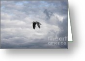 Lone Gull Greeting Cards - The Flight of the Gull Greeting Card by Terri Thompson