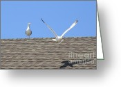 Seabirds Greeting Cards - The flyby Greeting Card by Meandering Photography