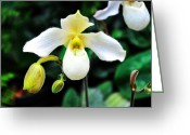 White Orchids Greeting Cards - The Flying Orchid Greeting Card by Andee Photography