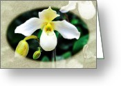White Orchids Greeting Cards - The Flying Orchid Oval Frame Greeting Card by Andee Photography