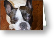 Brown Eyes Greeting Cards - The French Bulldog Greeting Card by Mary Machare