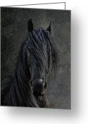 Stallion Greeting Cards - The Frisian Greeting Card by Joachim G Pinkawa