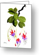 Fushia Painting Greeting Cards - The Fuschia Greeting Card by Alethea McKee