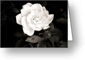 Bud Greeting Cards - The Gardenia Greeting Card by Karen M Scovill