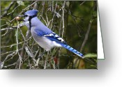 Blue Jay Greeting Cards - The gathering Greeting Card by Robert Pearson