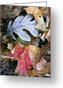 Leaves Photographs Greeting Cards - The Gathering Greeting Card by Trish Hale