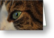 C Crespo Greeting Cards - The Gaze Greeting Card by Crespo