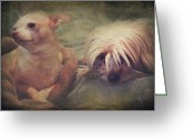 Toy Animals Greeting Cards - The Girls Greeting Card by Laurie Search