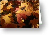 Lyle Hatch Greeting Cards - The Golden Days of October Greeting Card by Lyle Hatch