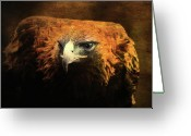 Red-tailed Hawk Greeting Cards - The Golden Hawk Locks On Target . R3593 Greeting Card by Wingsdomain Art and Photography