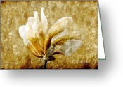 Delicate Mixed Media Greeting Cards - The Golden Magnolia Greeting Card by Andee Photography