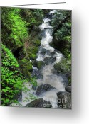 Foilage Greeting Cards - The Gorge Greeting Card by Paul Ward