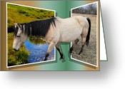 Caballo Greeting Cards - The Grass Is Always Greener On The Other Side Greeting Card by Shane Bechler