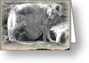 Playful Wolves Greeting Cards - The Gray Wolf Greeting Card by Debra     Vatalaro