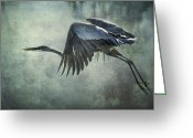 Heron.birds Greeting Cards - The Great Blue Heron  Greeting Card by Saija  Lehtonen