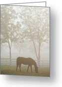 Refuges Greeting Cards - The Great Thoroughbred Gelding Forego Greeting Card by Raymond Gehman