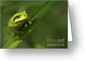 Sticky Fingers Greeting Cards - The green tree frog Greeting Card by Odon Czintos