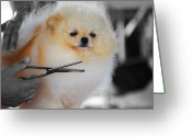 Chic Greeting Cards - The Groomer Greeting Card by Jai Johnson