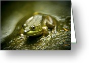 Frog Prince Greeting Cards - The Happy Frog Greeting Card by Kamil Swiatek