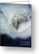 Close-ups Greeting Cards - The Heart Of A Poppy Greeting Card by Priska Wettstein