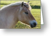 Horsehead Greeting Cards - The Horse and the Fly Greeting Card by Gert Lavsen