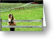Red Barns Greeting Cards - The Horse and The Red Barn . R5913 Greeting Card by Wingsdomain Art and Photography