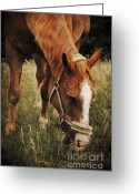 Wear Greeting Cards - The horse Greeting Card by Angela Doelling AD DESIGN Photo and PhotoArt
