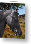 Domestic Scenes Greeting Cards - The horse - Gods gift to man Greeting Card by Christine Till