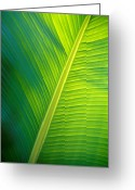 Image Type Photo Greeting Cards - The Iridescent Green Textured Ribs Greeting Card by Jason Edwards