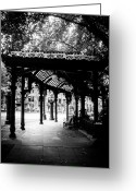 Pioneer Park Greeting Cards - The Iron Canopy Greeting Card by Will Teer