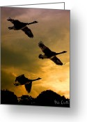 Geese Greeting Cards - The Journey South Greeting Card by Bob Orsillo