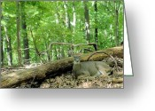 Forest Landscape Greeting Cards - The king rests Greeting Card by