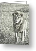 Vertebrate Greeting Cards - The King Stands Tall Greeting Card by Darcy Michaelchuk