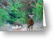 Whitetail Deer Greeting Cards - The King Greeting Card by Thomas Young