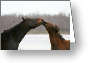Marry Greeting Cards - The Kiss Greeting Card by Deborah Hall Barry