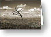 Duotone Greeting Cards - The Last One Standing Greeting Card by Scott Pellegrin