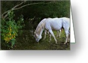 Horse Posters Greeting Cards - The Last Unicorns Greeting Card by El Luwanaya Arabians