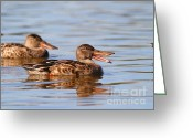 Laughing Greeting Cards - The Laughing Duck Greeting Card by Wingsdomain Art and Photography