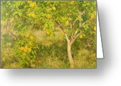 Summer On The Farm Greeting Cards - The Lemon Tree Greeting Card by Henry Scott Tuke