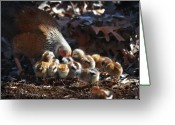 Poultry Photo Greeting Cards - The Lesson Greeting Card by Terry Kirkland Cook