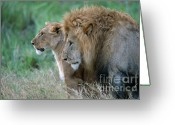 Safari Greeting Cards - The Lion And His Lioness Greeting Card by Sandra Bronstein
