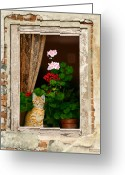 Kitty Digital Art Greeting Cards - The Little Tuscan Tiger Greeting Card by Bob Nolin