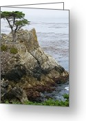 Beaches Greeting Cards - The Lone Cypress - California Greeting Card by Brendan Reals